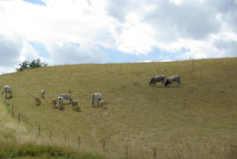 zvierata-na-pastve-Luka-ako-celodenna-potrava